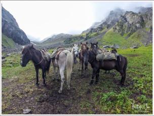 Mules and Horses Huddle Around