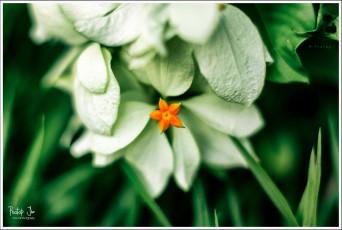 Saffron and Green