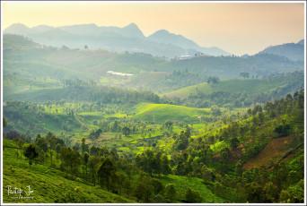 Tea Plantations at Niligiris in Tamil Nadu