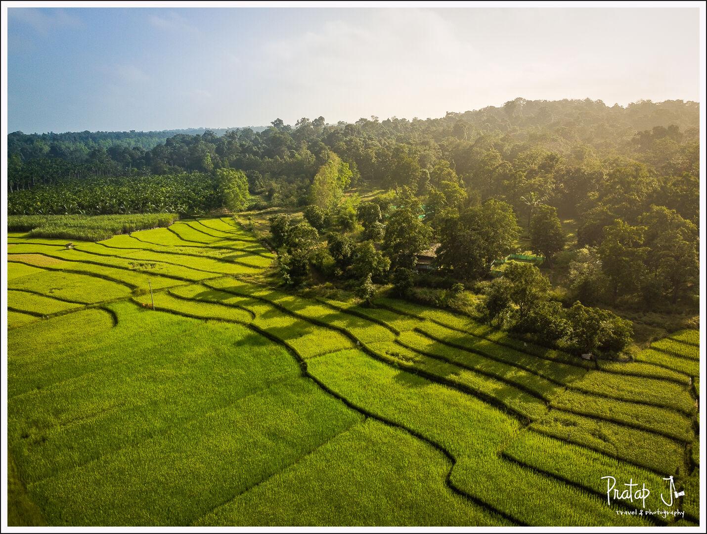 Paddy fields near Sirsi