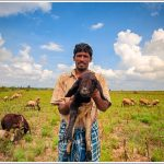 A Simple Village Shepherd
