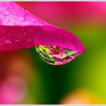 Waterdrop Macro Photography