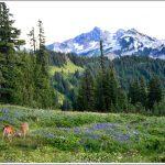 Mt.-Rainier-National-Park