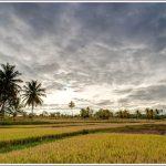 Fields near Mandya