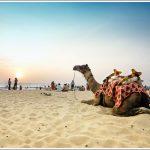 Camel at Panambur Beach
