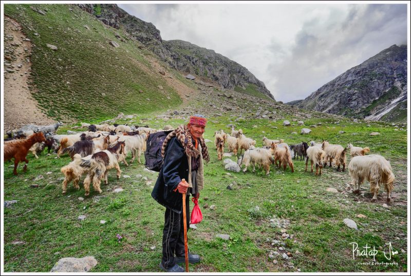 A Shepherd Readies for Travel in Spiti Valley