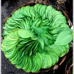 A photo of betel leaves from KR Market, Bangalore