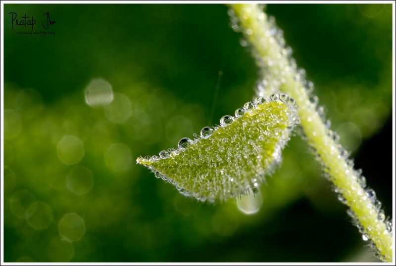Close up of a million dew drops on a leaf