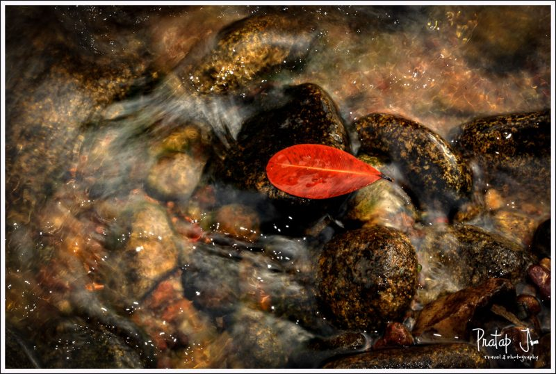 A still red leaf in flowing water
