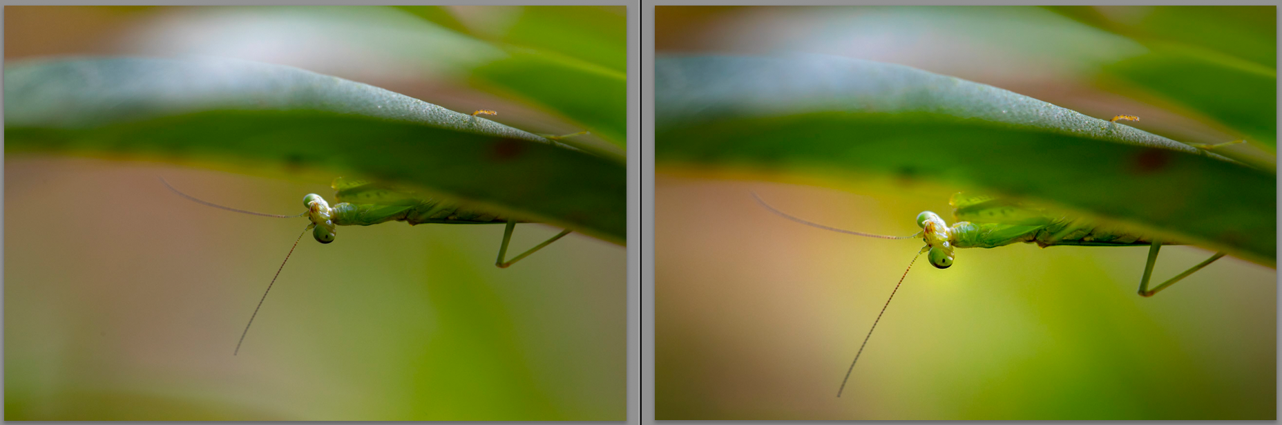 Processed macro photo and before processing