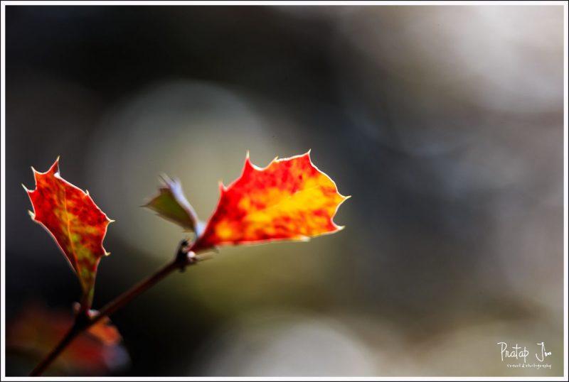 Nature on the Deoriatal Trek