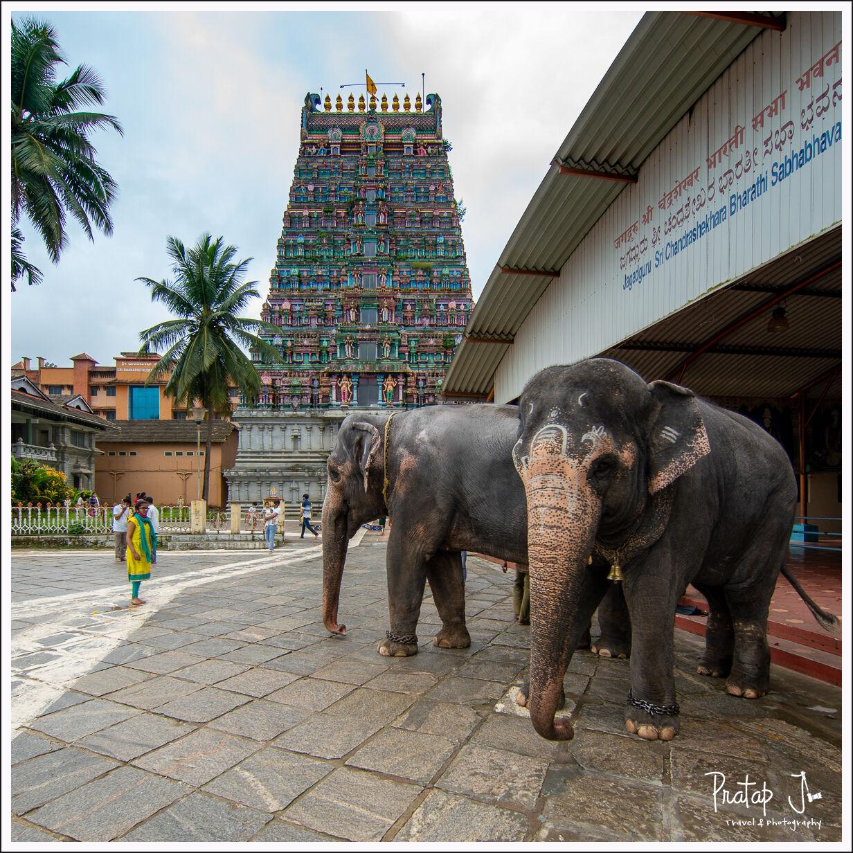 Elpehants at Sringeri Temple
