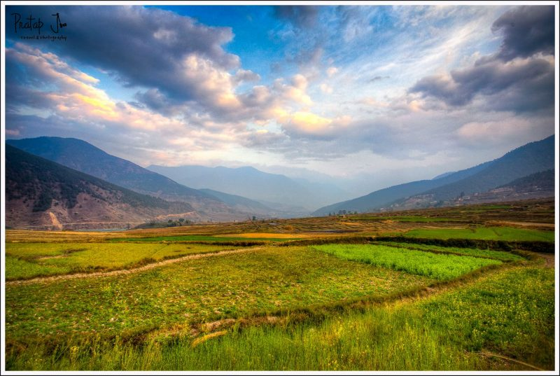 Green Paddy Fields in Punakha