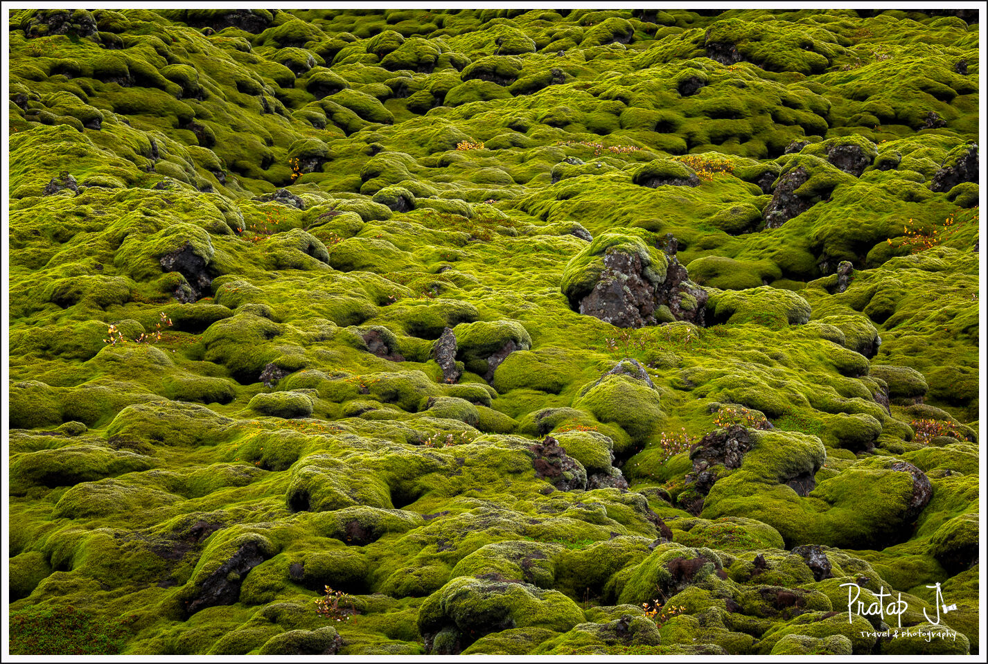 Moss at Eldhraun lava field