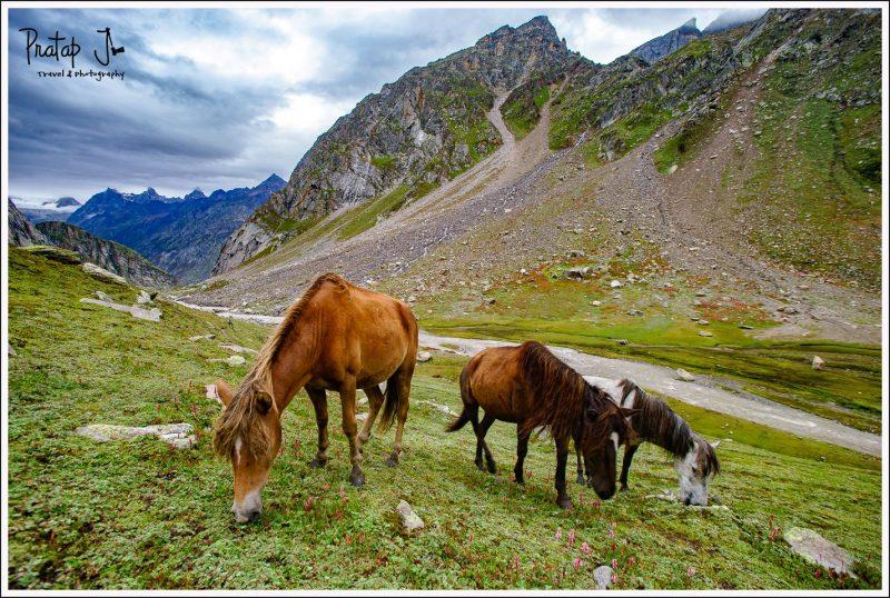 Horses grazing at the Shea Goru campsite