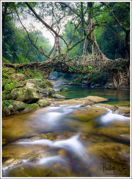 Living Root Bridge at Riwai