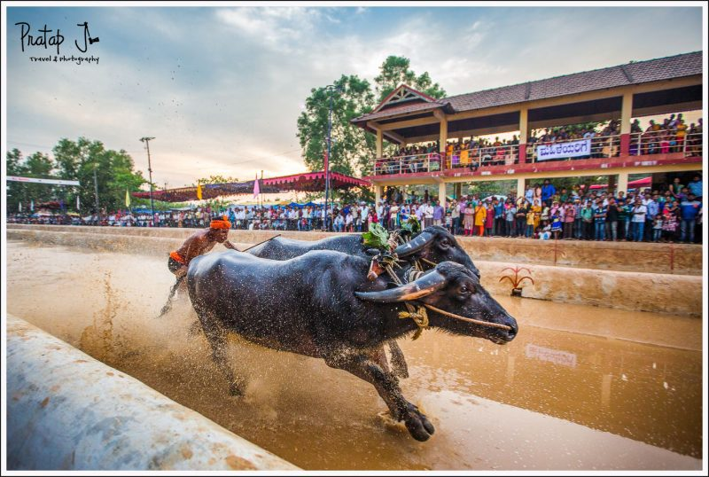 Getting close with a wide angle lens during a Kambala