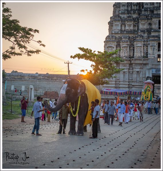 Temple Elephant in front of Virupaksha