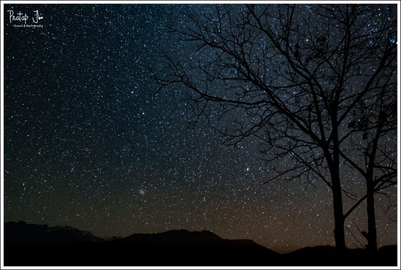 Silhouette of a tree against stars