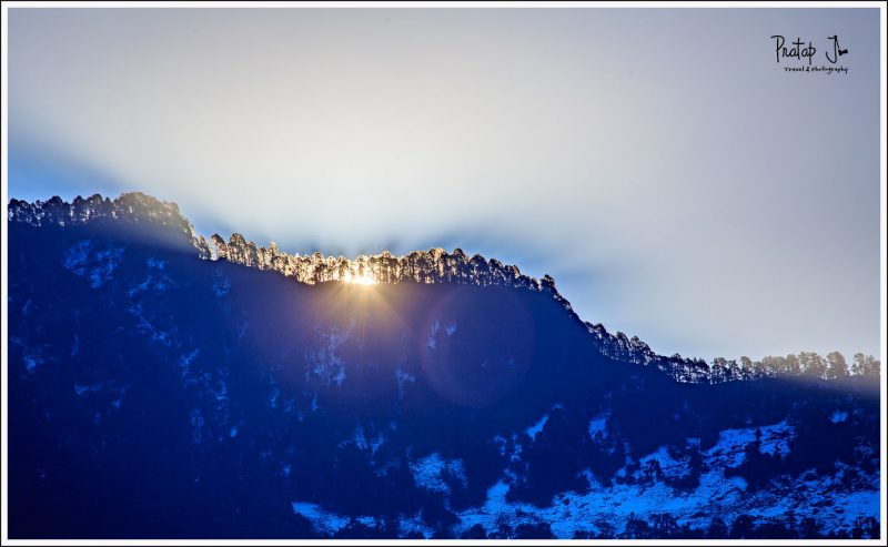 Himalayan Tree line with sunrise