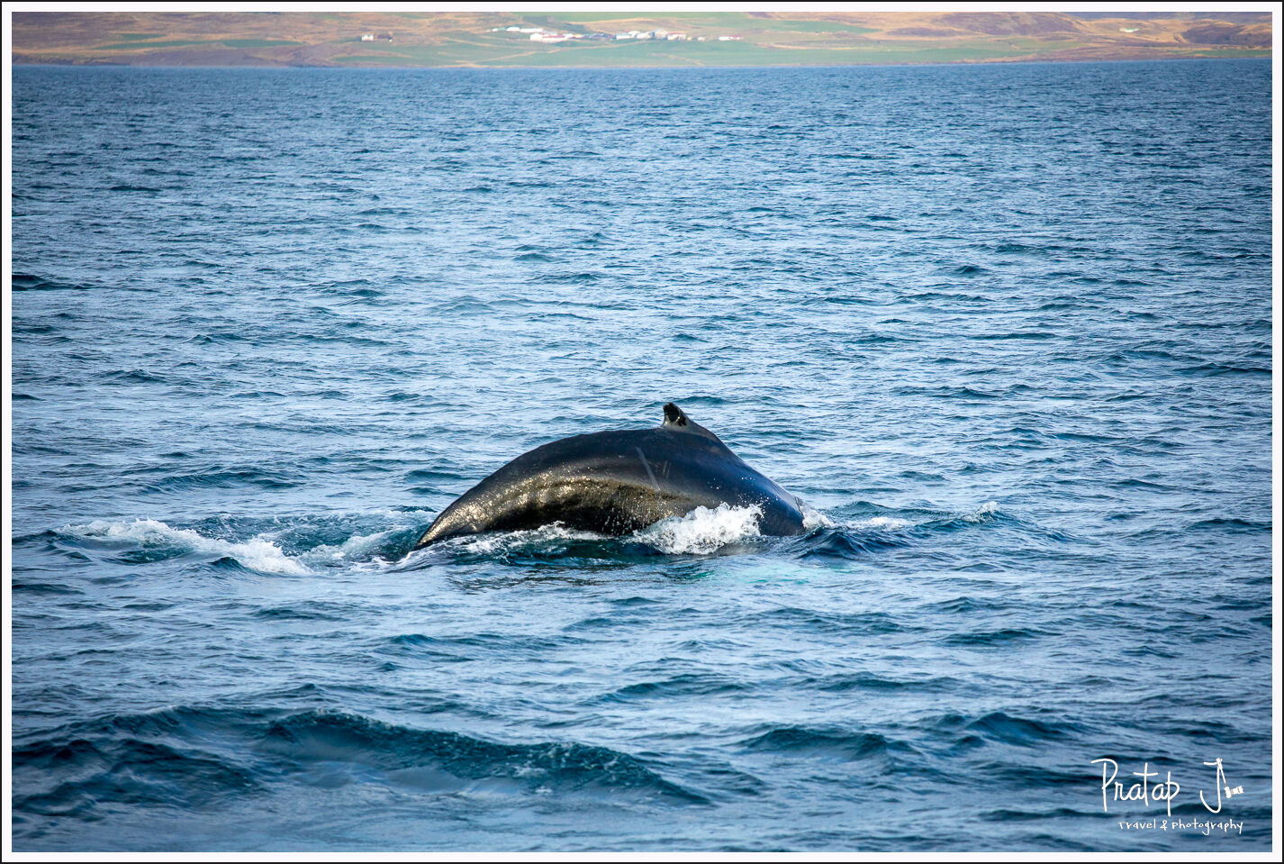 A hump back whale leaps over water